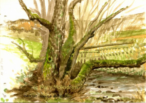 Small watercolor done while sitting along the bank of Edlingham Burn, on a very cold day in January.