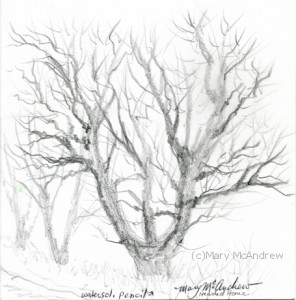 """Tree on Upper Lane"", a rough sketch on a very cold day, using water soluble pencils that I haven't wet yet!"