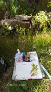 My sketchbook and paint kit, where I sat in front of the garden.