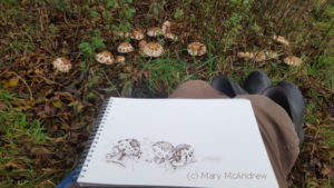 My drawing is getting there, just one more mushroom!
