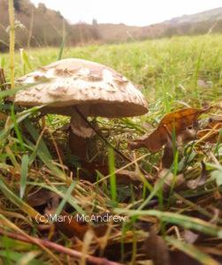 Side view of one mushroom.