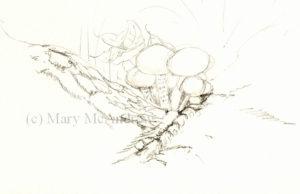 Very quick pencil sketch of mushrooms.
