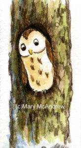 (c)wc paper test strips- owl 3 re