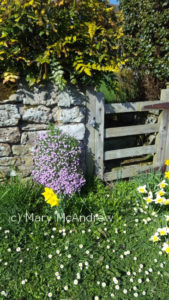 Happy Spring from our village in Northumberland, England!