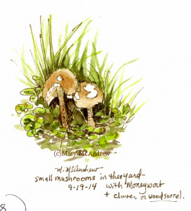 Tiny mushrooms growing in the grass. Watercolor + ink.